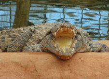 La Ferme aux crocodiles à Pierrelatte